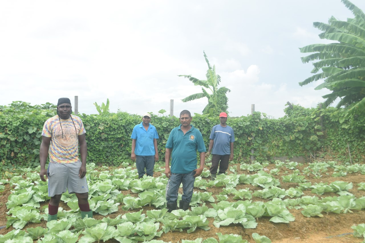 Hopetown farmers face eviction from state lands at Fort Wellington